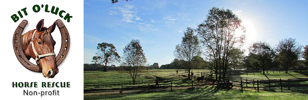 BIt O' Luck Horse Rescue North Carolina