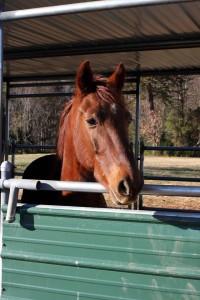 Horse Rescue Huntersville, NC